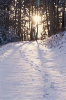 Image result for footprints in the snow